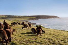 Onde Ficar na Ilha Kangaroo na Austrália